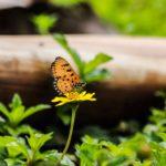 butterfly on yellow flower in woods